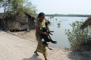 A villager in Koyra received goats from the non-profit Relief International to help her earn income after Cyclone Aila devastated the area in 2009. Photo: Amy Yee