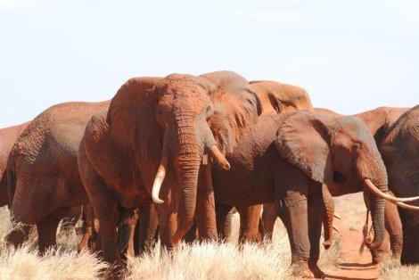 Elephants Rukinga