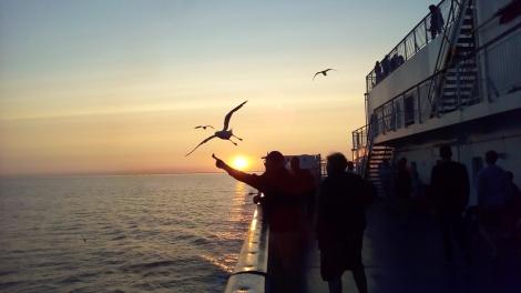Russia seagulls